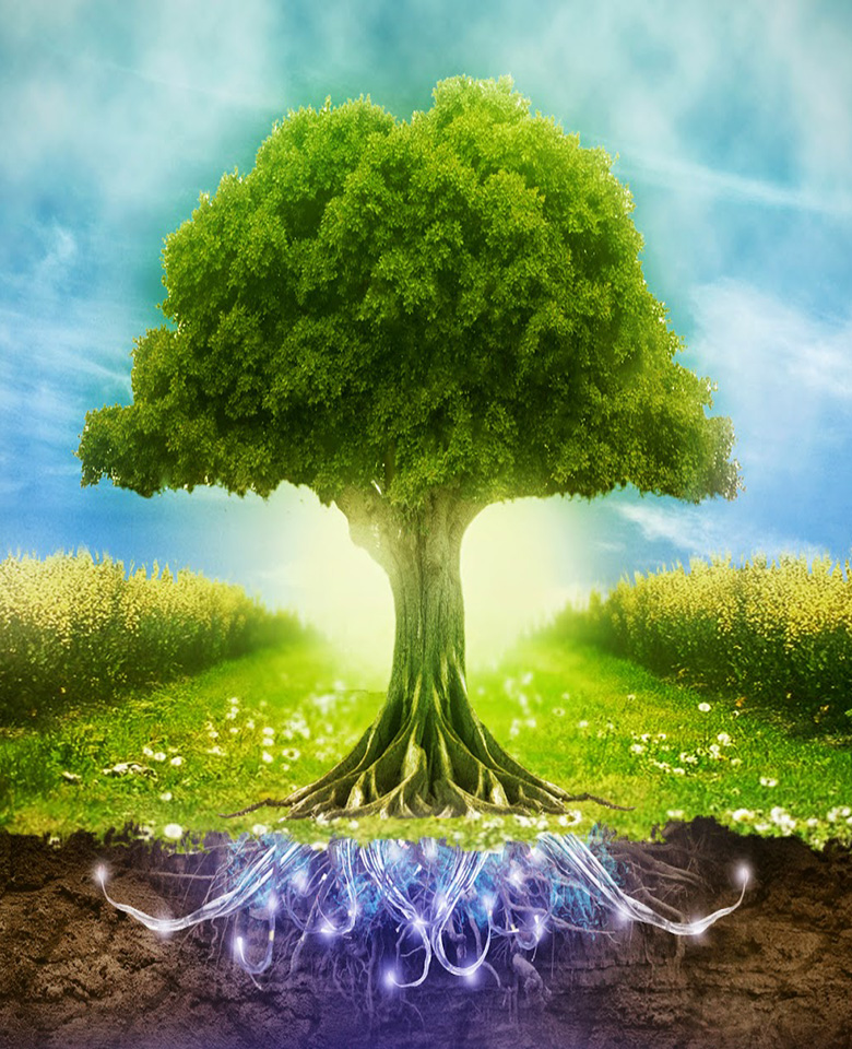 Happy World Environment Day HD Wallpapers and Pictures Green Tree